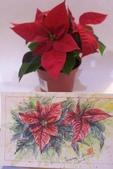 我手繪的耶誕卡。與名片。卡片:2014.手繪聖誕紅