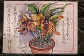 2014年我的手繪明信片《2》:2014.12月份 / 明信片交換 /過年應景的蝴蝶蘭