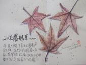 2019 每日一畫 / 生活速寫【4至6月】:20190628 淡彩 / 收藏楓葉