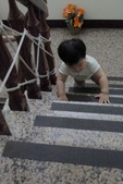 Baby家族:爬著上樓梯