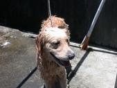 兒子洗澡篇:1125841013.jpg