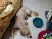 毛被剃光光的狗兒子XD:1522404771.jpg
