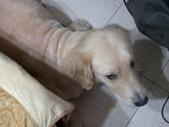 毛被剃光光的狗兒子XD:1522404776.jpg