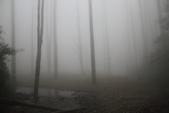 水漾森林:DPP_13.JPG