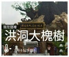 2016.8.29-洪洞大槐樹