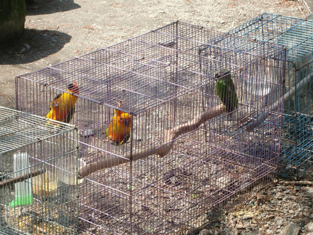 三富休閒農場 紫屋森林:CIMG2303.JPG