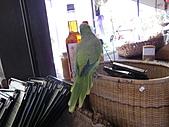三富休閒農場 紫屋森林:CIMG2290.JPG