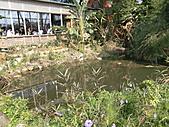 淡水休閒農場:CIMG0042.JPG