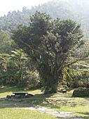 三富休閒農場 紫屋森林:CIMG2277.JPG
