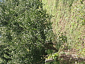 峨眉湖 環湖自行車道:CIMG9573.JPG