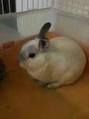 兔子小寶:IMG_0012.jpg