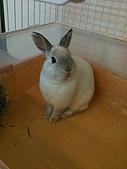 兔子小寶:IMG_0013.jpg