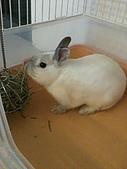 兔子小寶:IMG_0014.jpg