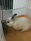 兔子小寶:IMG_0015.jpg