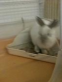 兔子小寶:IMG_0016.jpg