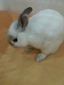 兔子小寶:IMG_0025.jpg