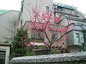 鄉村風-海芋:DSCF1917.JPG