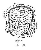 專業醫學:腸圖.JPG