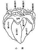 專業醫學:心圖.JPG