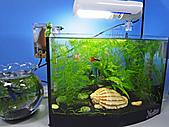 我的水草缸:R7231033.jpg