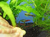 我的水草缸:R7231035.jpg