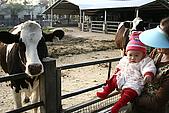 女兒員農爬草皮:女兒與乳牛的初體驗
