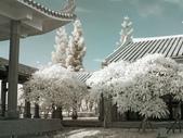 古坑休息站;嘉義縣表演藝術中心:R0019590.jpg