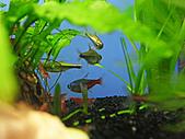 我的水草缸:R7231052.jpg