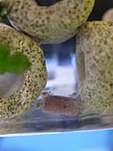 我的水草缸:R7231066.jpg