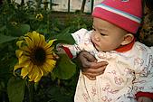 女兒員農爬草皮:女兒與向日葵的初體驗