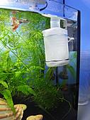 我的水草缸:R7231109.jpg
