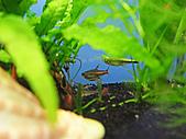 我的水草缸:R7231038.jpg