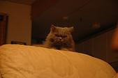 貓貓:DSC_0098-1.JPG