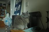 貓貓:DSC_8552.JPG