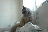 貓貓:DSC_0080.JPG