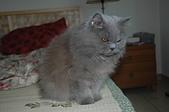 貓貓:DSC_6234.JPG