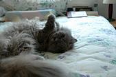 貓貓:DSC_0070.JPG