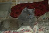 貓貓:DSC_6233.JPG