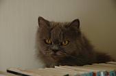 貓貓:DSC_0056.JPG