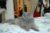 貓貓:DSC_0075.JPG