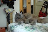 貓貓:DSC_0083.JPG