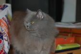 貓貓:DSC_0011-1-1.JPG