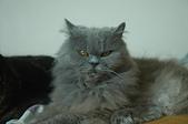 貓貓:DSC_4267.JPG