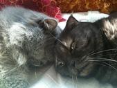 未分類相簿:貓貓與Tina