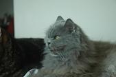 貓貓:DSC_4266.JPG