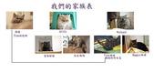 未分類相簿:貓咪家族表.jpg