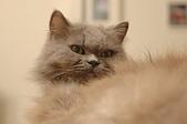 貓貓:DSC_0088.JPG