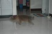 貓貓:DSC_4130.JPG