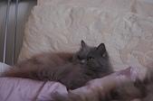 貓貓:DSC_4083.JPG
