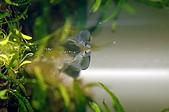 閒散人的水草造景:DSC_3576.JPG